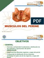 60402889 Musculos Del Perine
