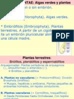 Sistema Del Reino Vegetal Flora II 2013