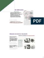BDP_13_27_03_2014_DesVegetatPosEmbr_RAM.pdf