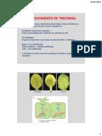 BDP_19_-_Tricomas_e_Estomas.pdf