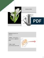 BDP_27_-_Reproducao_Masculino.pdf