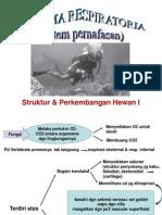Sph 03.05.13 Systema Respiratoria Sph 1