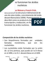 Presentacion Acidos Nucleicos 10º