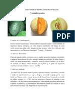 Descripción de Las Variedades Botánicas Melón
