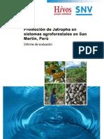 Informe de Evaluacion Jatropha San Martin (1)