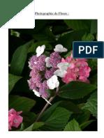 Photographie de Fleurs