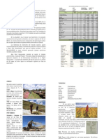 Manual Tecnico Cultivo de Quinua Quinoa Organica