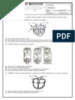 Exercícios Sistema Circulatório - CRB