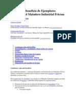 Proceso de Beneficio de Ejemplares Bovinos en El Matadero Industrial Fricosa