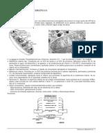 09 Organulos Energeticos[1] Copy