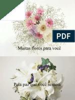 Muitas flores para você