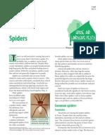 Spiders PDF