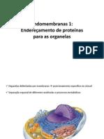 Aula Endomembranas 1 Enf_2014