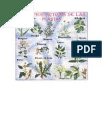 Plantas COLORANTES