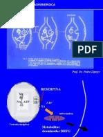 4275-neurotrasmision_adrenergica_2_PARA_ALUMNOS
