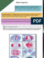Unid 1 Anatomia Vegetal - Tejidos-Final