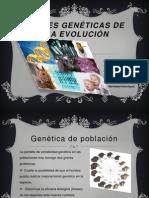 Bases Genéticas de La Evolución
