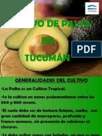 Palta Tucuman