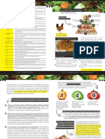 Folleto Nutricion Vegana DefensAnimal