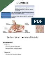 Nervios I, III, IV, VI