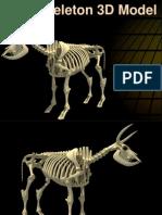 Cow Skeleton