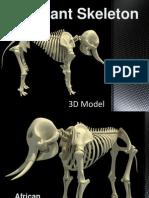 Elephant Skeleton