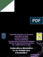 Presentación_mariatorres_movimiento de Sustancias a Traves de La Membrana.