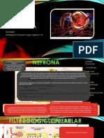 230387112-nefrona