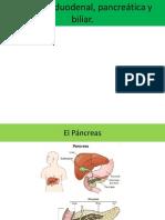 2-Secreción Duodenal, Pancreática y Biliar._fisio 2013