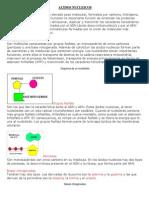 110729424-ACIDOS-NUCLEICOS.pdf