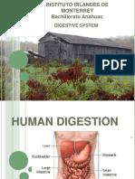 Digestive System IV