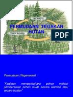 5-Permudaan Hutan