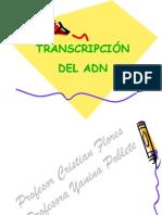 transcripcion 2014