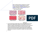 tejidos - biologia