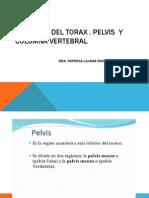 Anatomia Del Torax , Pelvis y Columna Vertebral