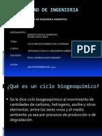 Ciclo Biogeoquimico Del Carbono