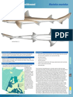 Common Smoothhound Shark Trust Factsheet