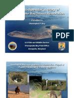 poplar island preview pdf