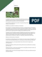 La Industria en Guatemala