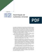 assimilacaodenutrientes_cap12