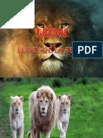 Presentación LEON