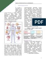 28725012 Anatomija i Fiziologija Čoveka Endokrini Sistem