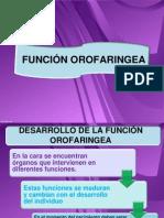 Dllo Funcion Oral Faringea Modificada