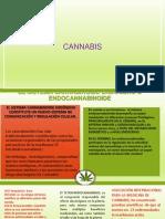 Bioqui Cannabis