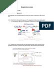 Cell Respiration Notes (3&8)