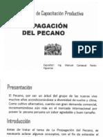 Propagacion de Pecano
