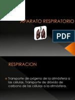 11. Aparato Respiratorio (37)