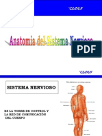 Anatomia Sistema