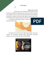 PortfólioARTES HISPANICA