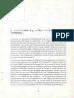 Ontogenia y Función de La Bursa de Fabricio